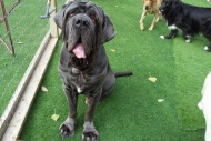 synthetic-grass-dogs-play-areas-01